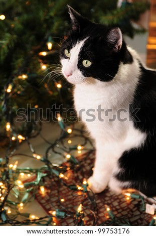 Holiday pet safety and cat with Christmas lights