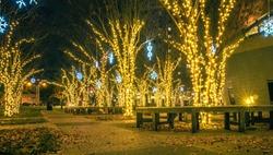 holiday scenes in uptown charlotte north carolina