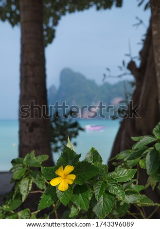 Holidays at the sea. Wonderful sea view surrounded by mountains. Blue water of the sea. Very relaxing vacation. Phi Phi island and boat. Cliffs and clear beaches on Phi Phi Island in Thailand.