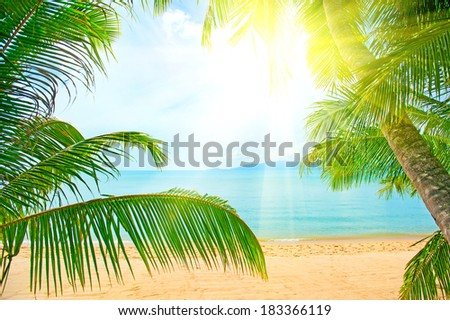 Holidays Background. Beautiful tropical beach with palm tree and sand