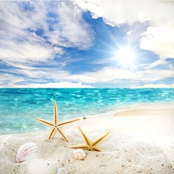 Holidays in the wonderful Caribbean Samana beach, summer vacation, background with starfish,  sea shells, beach and sunny sky,  tropical symbol