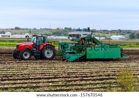 HOLLAND MARSH, ONTARIO - OCT 5: Farm workers operating onion harvester on Oct 5, 2013 in Holland Marsh field, one of the most productive agriculture regions in Ontario, Canada.