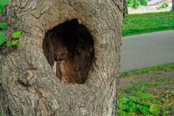 HOLLOW IN A TREE STANDING IN A SUMMER PARK