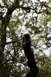 Hollow Oak branch provides food for tiny tufted titmouse bird, select focus.