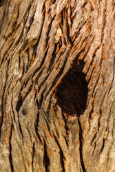 Hollow wood from old tree. Hole in the tree. Wood hollow, look like an eye of the tree. Old wood surface, texture for background. Bark texture, Tree trunk in the woods.