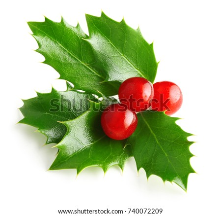 Holly berry leaves Christmas decoration isolated on white background #740072209