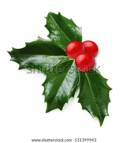 Holly berry leaves isolated #531399943