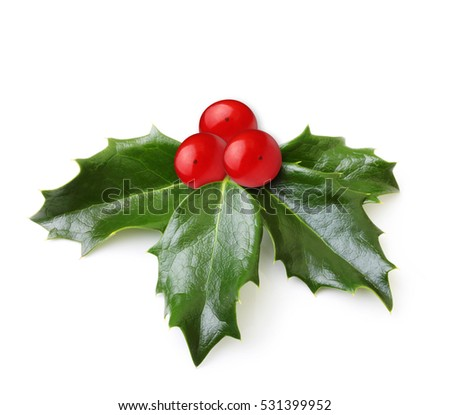 Holly berry leaves isolated #531399952