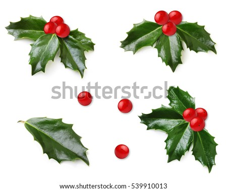 Holly berry leaves isolated #539910013