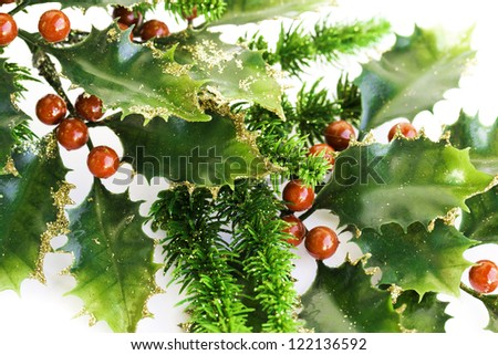 Holly berry plant with red berries on white background, Christmas decoration.
