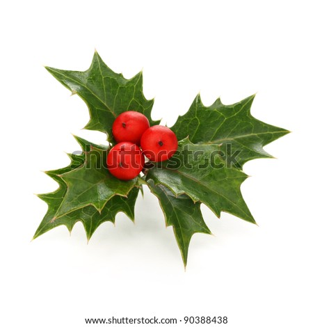holly berry sprig, christmas symbol