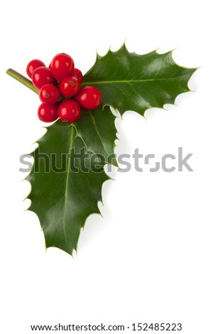 Holly Christmas decoration, Clipping path included. #152485223