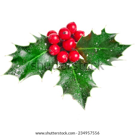 Holly Christmas decoration. Clipping path included.  #234957556