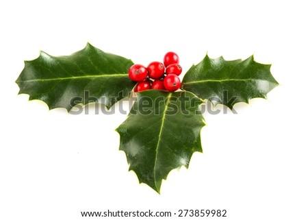 Holly, Christmas, Holiday. #273859982