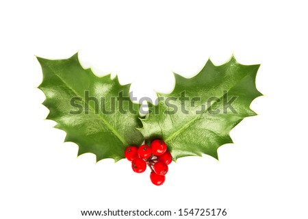 Holly leaves and berries isolated on white background. Christmas postcard concept