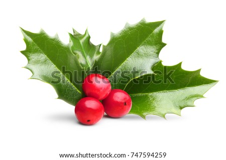 Holly leaves decoration with red berries. #747594259