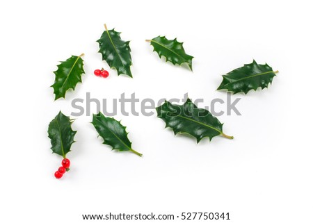 Holly leaves on white background #527750341