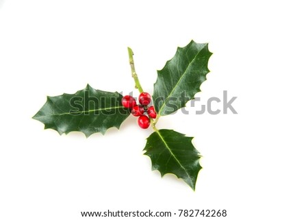 Holly sprig of Holly #782742268