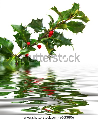 Holly Sprig on Water
