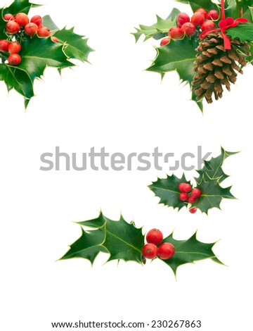 Holly Sprigs and pinecone on white #230267863