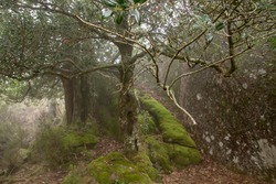 Holly trees in enchanted forest