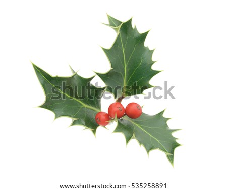 Holly with red berries #535258891