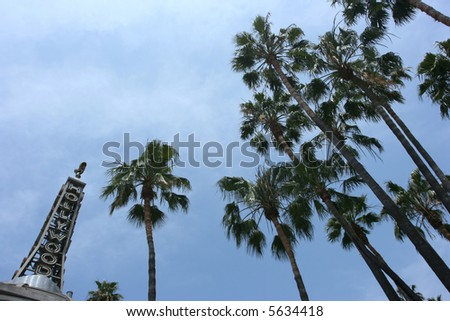 hollywood and palmtrees