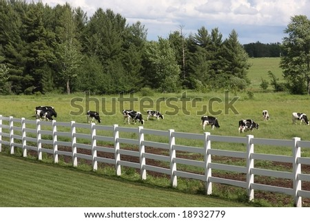 holstein herd behind white fence - stock photo