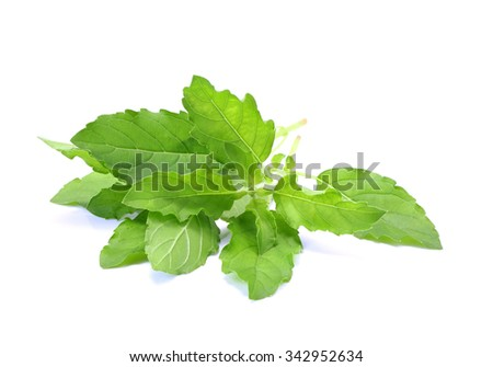 Holy Basil,Ocimum sanctum isolate on white #342952634