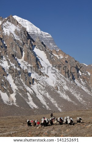 Holy Mount Kailash in Tibet and yak carrying supplies