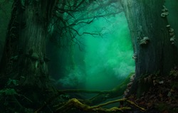Holy smoke. Mysterious forest, fabulous blue background with holy atmospheric smoke, old trees, crooked branches. Digital backdrop. Thank you buyers