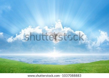 Holy spirit bird flies in skies, bright light shines from heaven, white dove symbol of love and peace descends from sky, green grass on spring meadow #1037088883