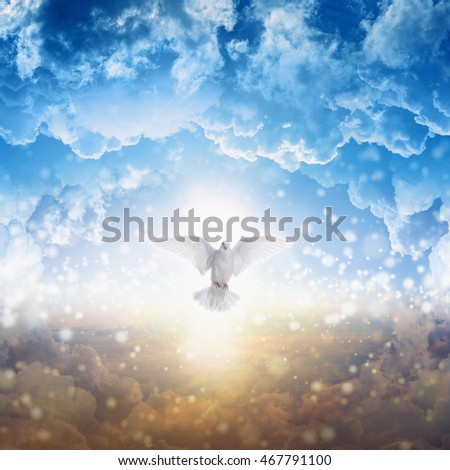 Holy spirit bird flies in skies, bright light shines from heaven, white dove - symbol of love and peace - descends from sky #467791100