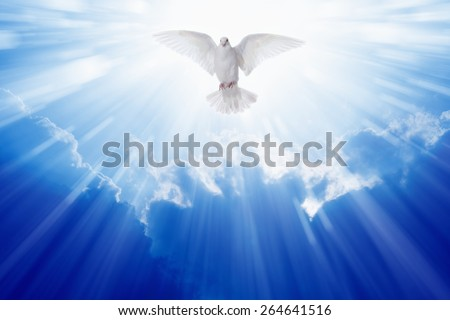 Holy spirit dove flies in blue sky, bright light shines from heaven, christian symbol Foto stock ©