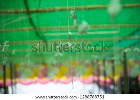 holy thread,holy thread and green background,holy thread in the temple. #1288788751