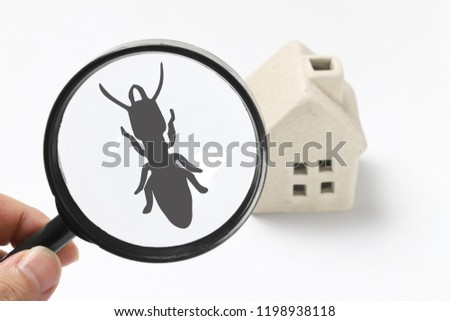 Home and termite