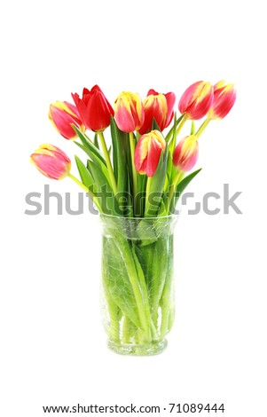 Home appliance - beautiful tulips in vase isolated