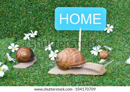 HOME board and tree snails