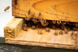 Home-build beehive in a backyard with bees buzzing around.