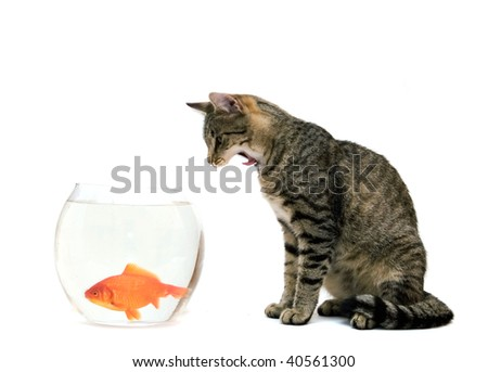 Outstanding Cat Looking At Goldfish In A Fish Tank Images And Stock Download Free Architecture Designs Rallybritishbridgeorg