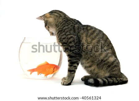 Enjoyable Cat Looking At Goldfish In A Fish Tank Images And Stock Download Free Architecture Designs Rallybritishbridgeorg