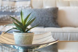 Home decor style with potted Aloe vera succulent plant.