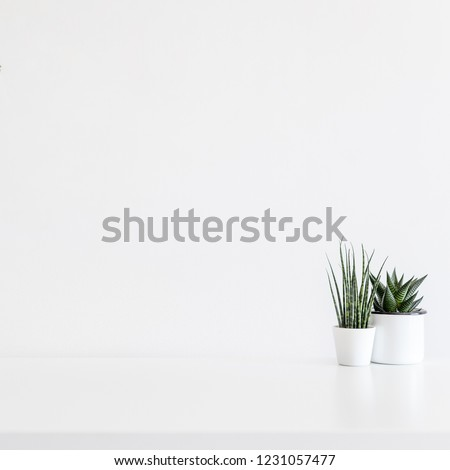 Home decor two succulent plants on white desk or a shelf with white wall for copy space. #1231057477