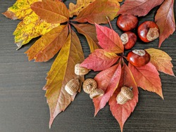 Home Decoration - Autumnleaves with Horse Chestnuts and Acorns