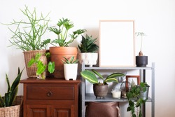 Home decoration with houseplants and mock up frame poster in hipster room
