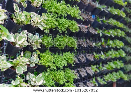Home garden with hanging pot on the wall. Vertical garden