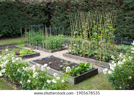 Home grown (homegrown) organic vegetables growing in a UK garden in spring Stock photo ©