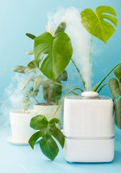 home humidifier freshener, humidifier steam on blue background, monster, monster plant, green plants air purifier for breathing, clean breathing fresh air, humidifier for plants take care of plants