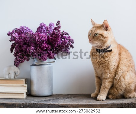 Home interior decor, bouquet of lilacs in a vase, books and ginger cat on rustic wooden table, on a white wall background