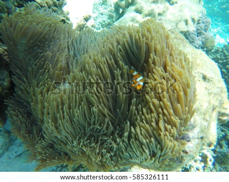 Home of the clown fish. Stok fotoğraf ©